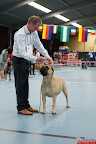 20130510-Bullmastiff-Worldcup-0864.jpg