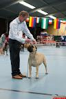 20130510-Bullmastiff-Worldcup-0864.jpg