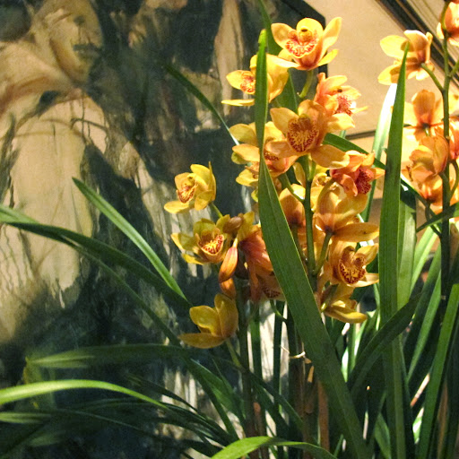 Sunny orchids perched in clusters throughout the rooms.