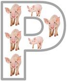 Pp pig