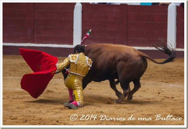 Toros 2014 (2)-28