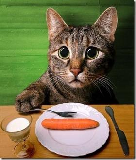 cose-da-non-far-mangiare-gatto