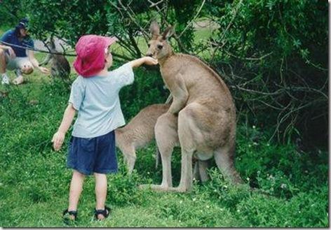 kangaroo_sex
