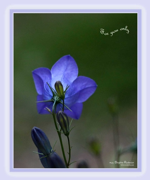 card_20110621_bluebell_forU