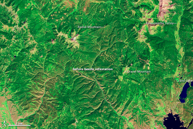 The Thematic Mapper on Landsat 5 acquired this image of lodgepole pine forests near Grand Lake, Colorado on 11 September 2005, before a severe bark beetle infestation led to die-off of the tree canopy. NASA Earth Observatory image created by Robert Simmon, using Landsat data provided by USGA