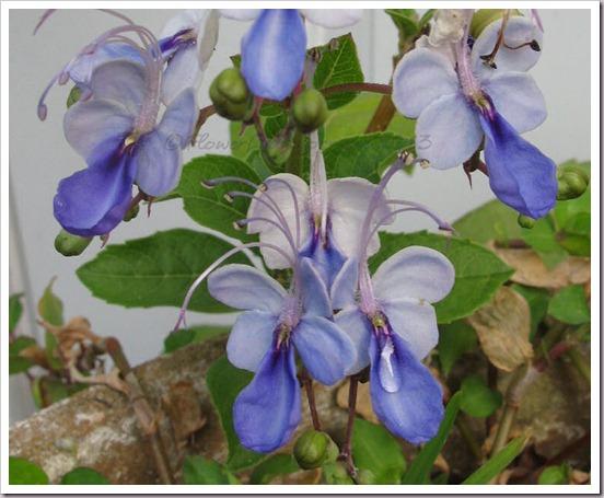 04-10-blue-clero
