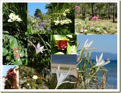 fleurs des vacances