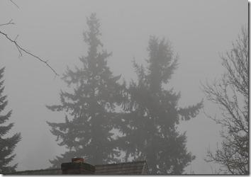 fog (6)