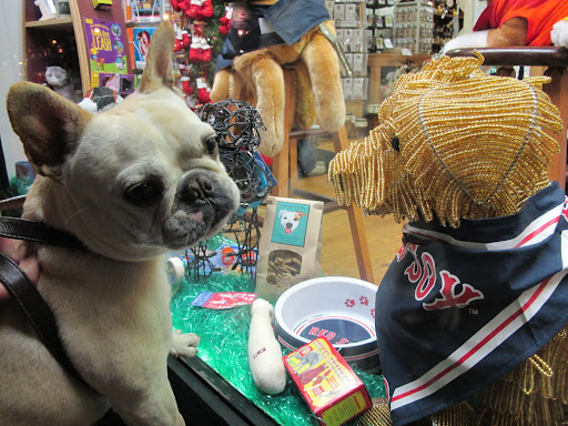 You're right, Franny.  It's a pet store.  However, I don't think that Martha would approve of what this dog is wearing.  After all, Martha is a Yankees fan.