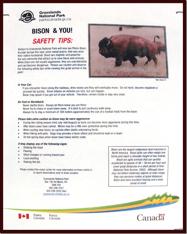 Bison safety tips - photo by Shelley Banks