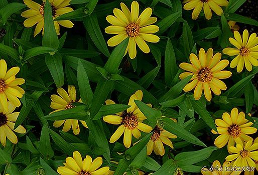 Glória Ishizaka - Flor amarela 21