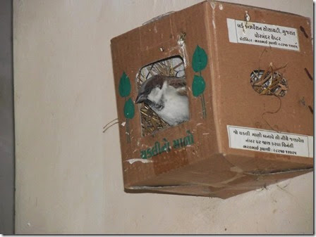 bharat-rughani-sparrow-nest