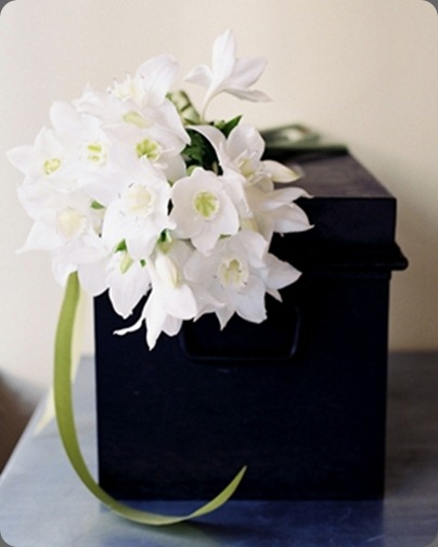 Paperwhites Karen Wise