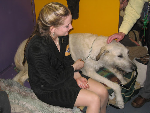 An Irish Wolfhound -- one of the biggest breeds in the world!