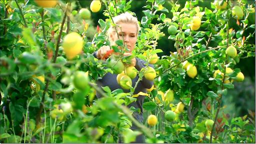 Yolanda Foster Lemon Trees Why lemon trees?