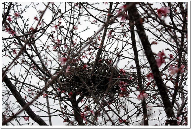 nest_edited-1