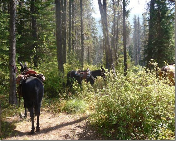 Horse trip 125