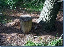 4925 Laurel Creek Conservation Area - evening walk - Geocache sitting in a Pine Stand