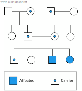 Pedigree showing autosomal recessive disorder