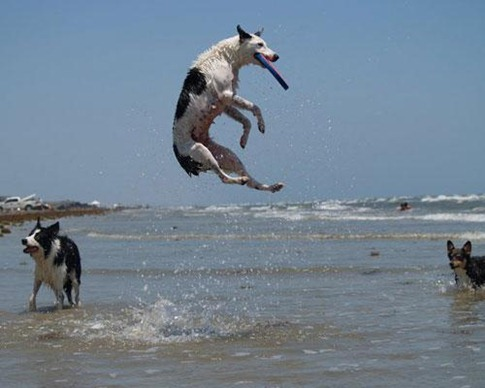 Jumping high dog
