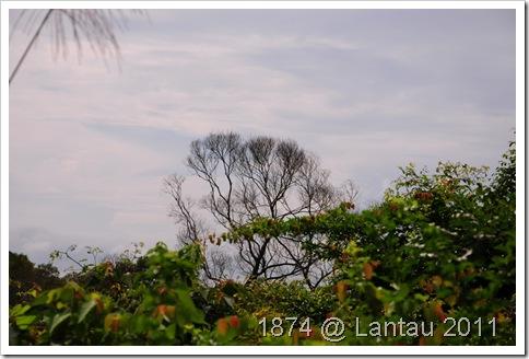 雨後的天空, 加上這棵禿樹, 獨特的氣氛