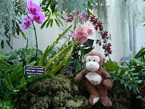 CM w/ orchids