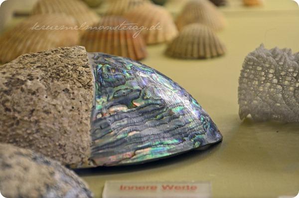 Wremen 20zwölf Tag 5 Muschelmuseum (16)