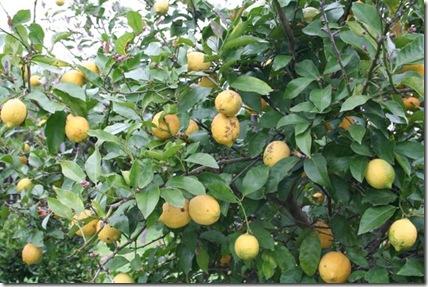 Limón - 3-10-07 - 2-