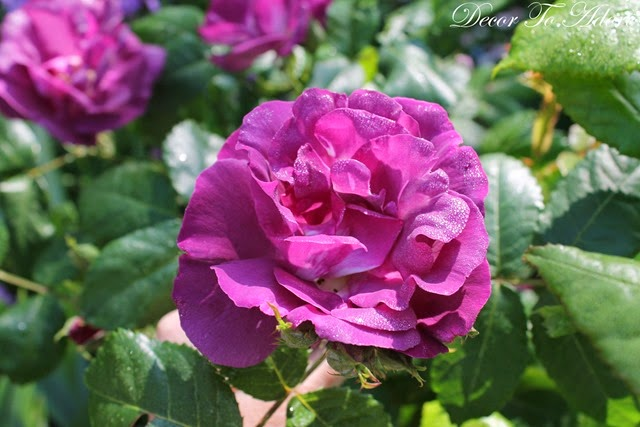 Monet's Garden 014