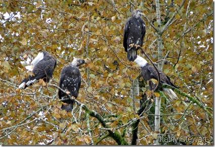Closer look at 4 eagles