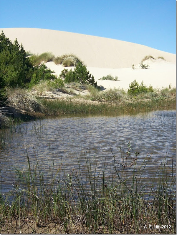 Oregon Dunes National Recreation Area.  Eel Creek State Park.  Oregon.  July 3, 2011.  Photo of the Day, March 11, 2012.