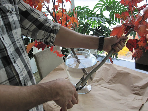 Tom prepares the bottom of the branches to help the plant receive plenty of drinking water.