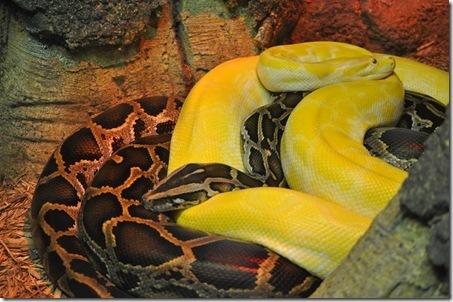 07-11-11 zoo 33