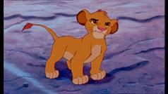 06 Simba jeune