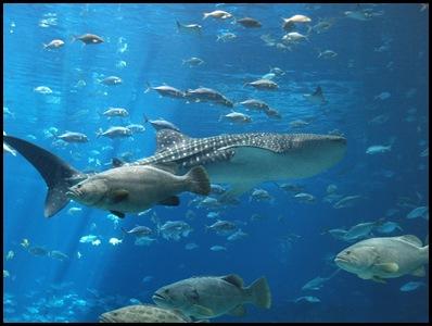 georgia aquarium2