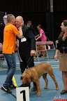 20130510-Bullmastiff-Worldcup-1429.jpg