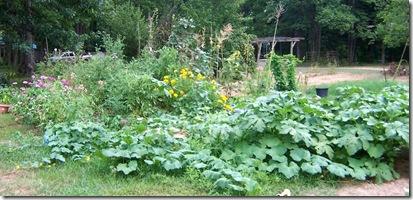 garden july 007