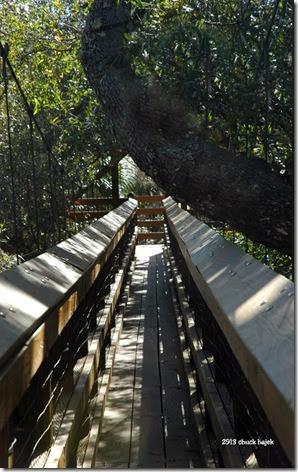 Myakka swinging walkway 123