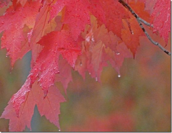 Rainy Day Leaves