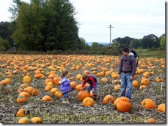 Pumpkin Patch at Sauvie Island