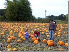 Pumpkin Patch at Sauvie Island
