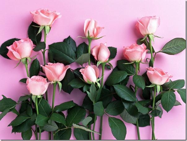 flor día del amor (46)