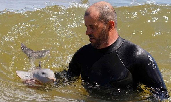 The baby dolphin found in Uruguay who melted a thousand hearts.