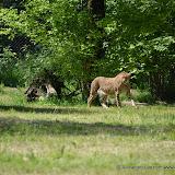 Safaripark_130527-024.JPG