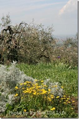 La Selva i fiori 7