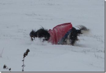 Maisie having fun in the snow 012 (1024x702)