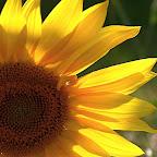 angkorsite_flower_1 (114).jpg