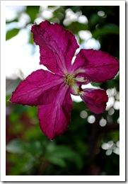 trädgården juli 2011 024
