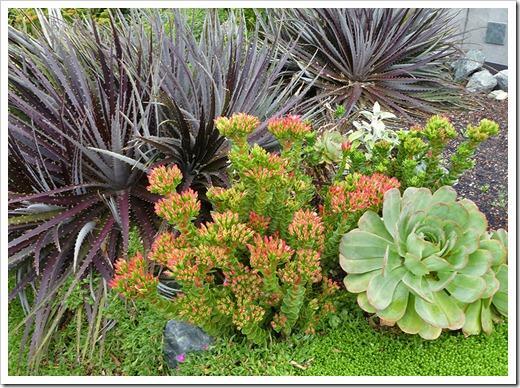 110723_annies_annuals_succulents