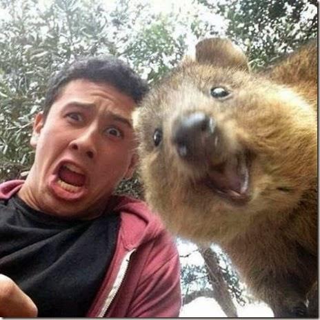 selfies-australian-quokka-009